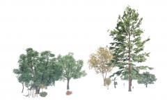 Some tree revit models