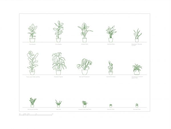 15 piante domestiche (sistema metrico)