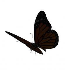 3DS Butterfly Model