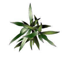 Farbige Bush / Pflanze