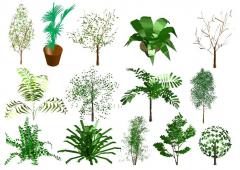Bäume in 3D CAD-Sammlung