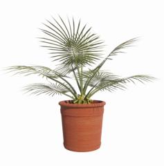 3D_plant revit family
