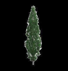 Poplus tree 3DS Max model