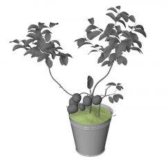 Plant Revit Family 37