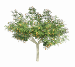 Lagerstroemia tree with flower revit family