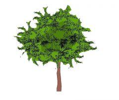 Trees Elevation - Colour (single3)