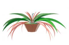 Chlorophytum revit family