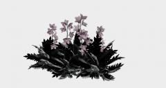 花SKPモデルの装飾