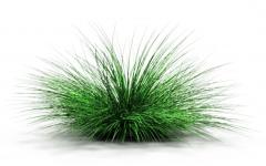 Fountain grass revit family