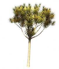 Grass Palm revit family