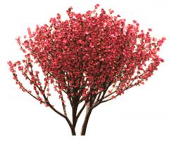 Honey Myrtle tree revit family