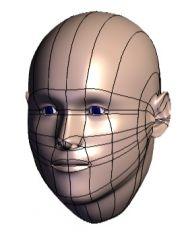 Human Head Solidworks Model