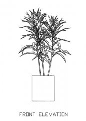 Indoor Plants for Living Room 32 Elevation dwg Drawing