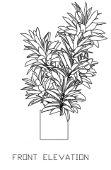 Indoor Plants for Living Room 50 Elevation dwg Drawing