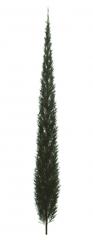 Italian Cypress revit family