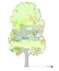 2d  tree furlong revit family