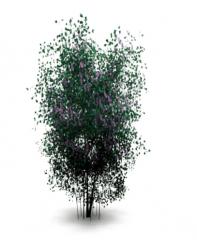 Lilac tree revit family