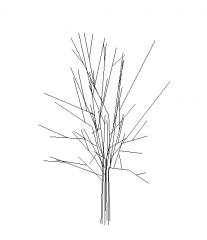 2d  Fruit trees revit family