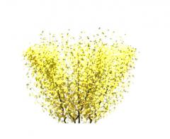 Meadowlark tree revit family