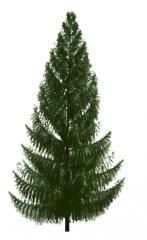 Norway Spruce tree revit family