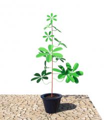 POTTED_PLANT revit model