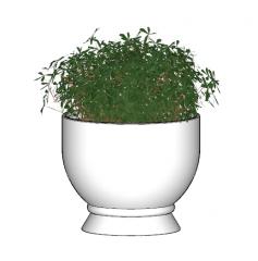 植物リッテフラワーskp