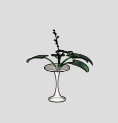 Pflanze transparente Vase skp