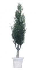 Pine potted Plant revit family