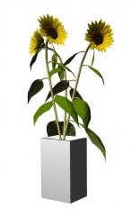 Vaso per fiori Sun skp