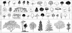 (付费精选2)海拔树