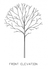 Trees for Landscape 14 Elevation dwg Drawing