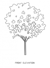 Trees for Landscape 1 Elevation dwg Drawing
