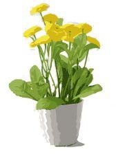 желтый рисунок белис